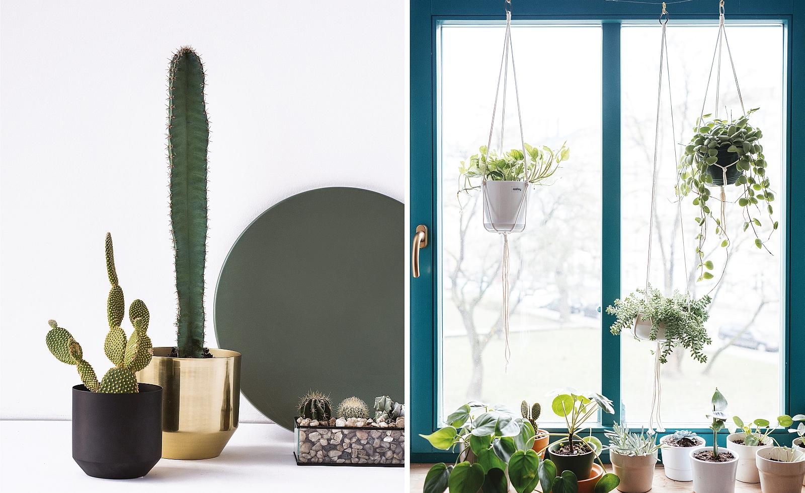 Nawet minimalistyczna przestrzeń jest bez roślin niekompletna (fot. Agata Piątkowska / fot. Michał Sierakowski)