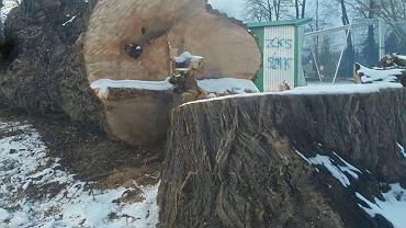 Uniwersytet wycina 37 drzew w parku. Tego uczą przyszłych ministrów środowiska?