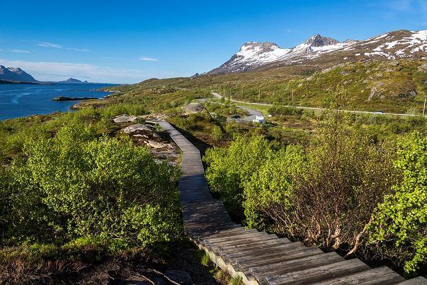 Punkt widokowy na trasie Lofoten