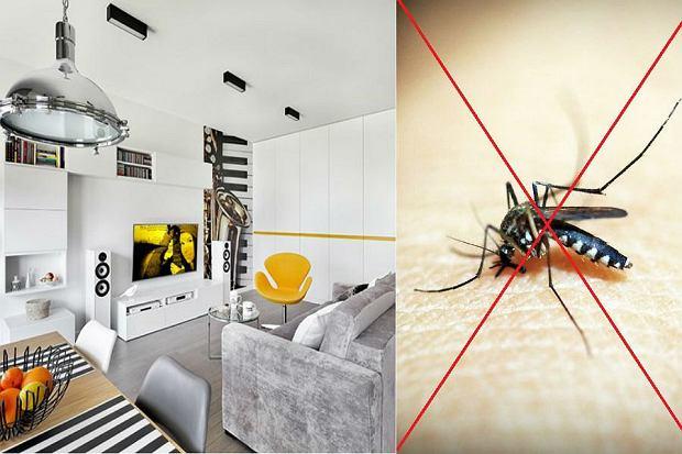 Dom bez owadów - środki i preparaty