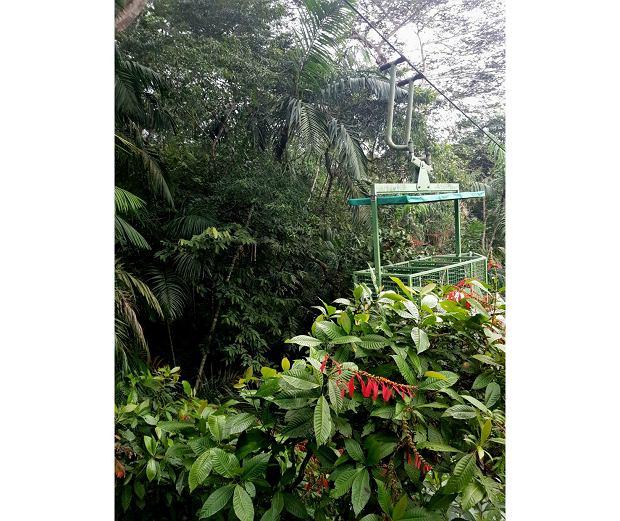 Podróż kolejką linową po dżungli w Parku Narodowym Chagres to niesamowite przeżycie. Las deszczowy widziany niemalże 'z góry'' title='Podróż kolejką linową po dżungli w Parku Narodowym Chagres to niesamowite przeżycie. Las deszczowy widziany niemalże 'z góry'