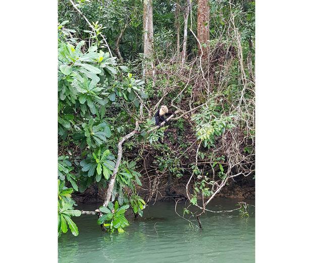 Podczas wycieczki motorówką można spotkać różne zwierzęta zamieszkujące tereny jeziora Gatun