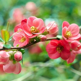 Wiosna -