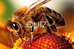 Myślisz, że potrafisz odróżnić osę od pszczoły? To sprawdź w quizie. Na 2. pytaniu - pogrom