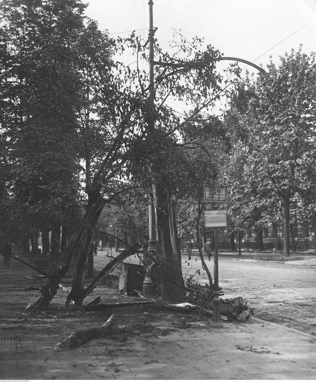 Uszkodzone przez pociski drzewa w Alejach Ujazdowskich.