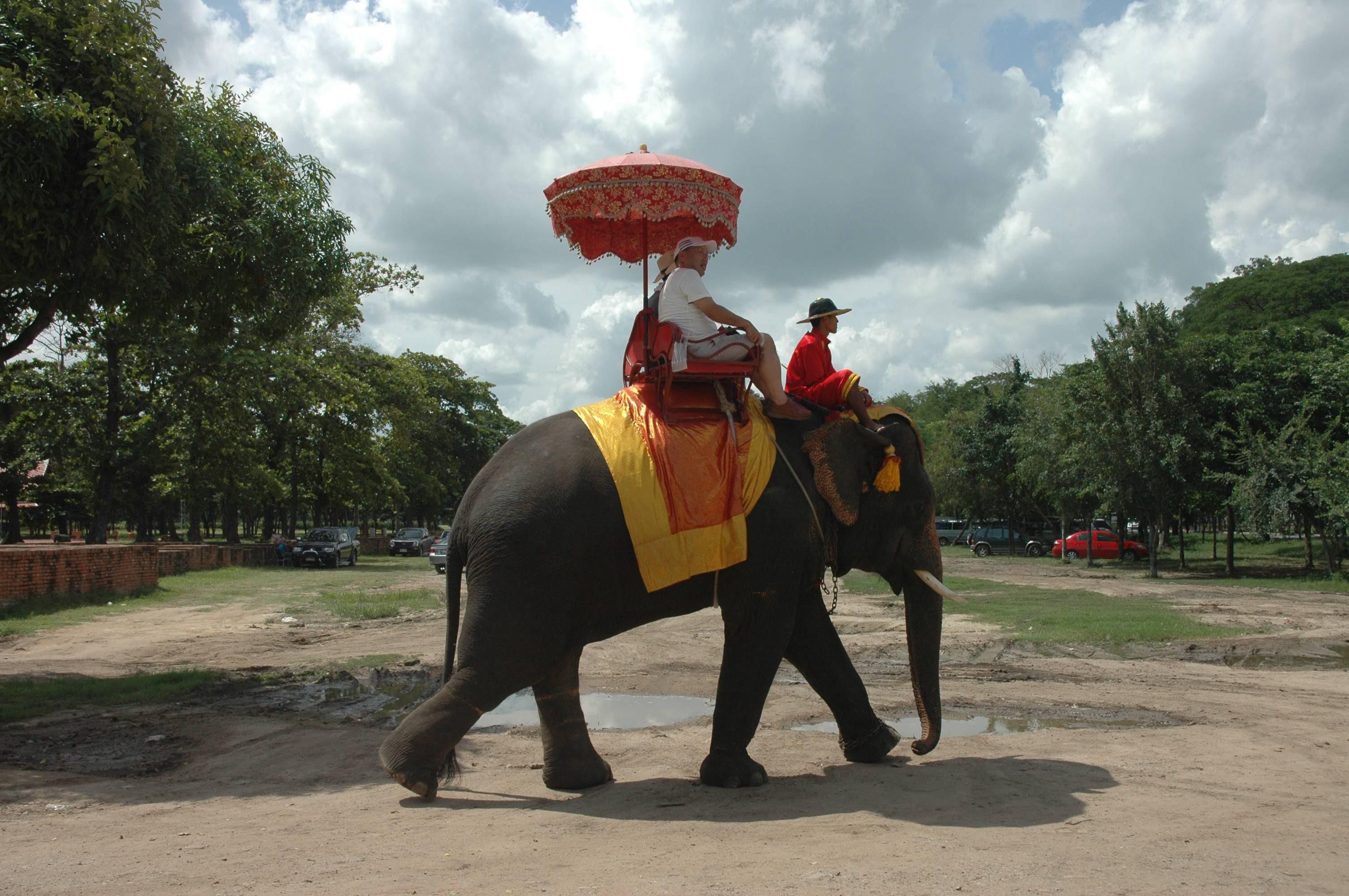 Ayuthaya. Przejażdżka na słoniu (fot. Anna Lewańska / Agencja Gazeta)