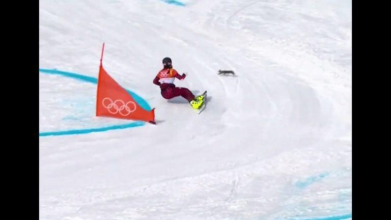 To druga, obok Ledeckiej, największa bohaterka slalomu. Bohaterska wiewiórka!