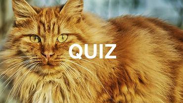 Uważasz się za miłośnika kotów? Ten quiz odsieje laików od znawców