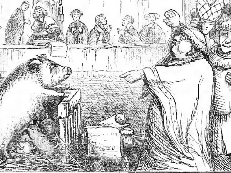 """""""Świnie na szafot szły najczęściej"""". Za co zwierzęta skazywano na karę śmierci?"""