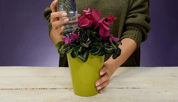 Wyjeżdżasz i boisz się o kwiaty? W ten sposób przetrwają twój urlop