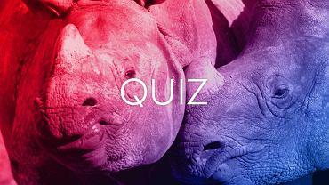 Jeśli znasz się na zwierzętach, to w tym quizie musisz mieć co najmniej 9/12