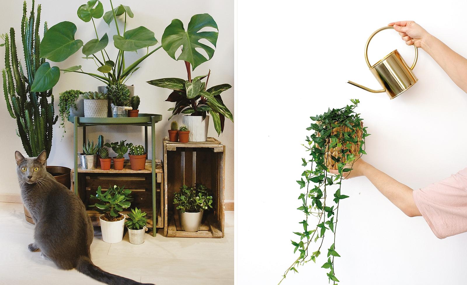 Rośliny może hodować każdy (fot. Ola Sieńko / mat. z książki 'Projekt Rośliny')