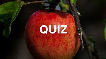 To nie jest zwyczajny quiz o owocach. Przyda się trochę życiowej wiedzy