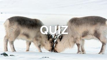 Sprawdzimy, czy znasz się na zwierzętach. Musisz być wyjątkowo uważny!