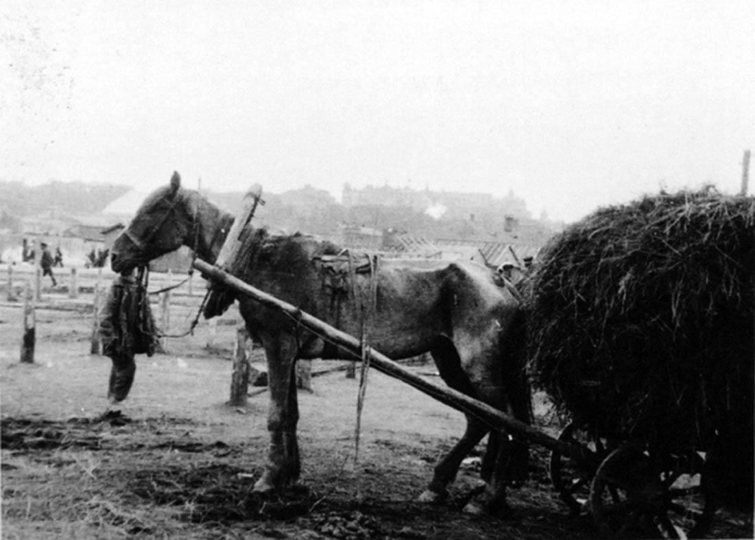 Ukraińska wieś w czasach Wielkiego Głodu, 1933 r. (fot. Wikimedia.org / Domena publiczna)