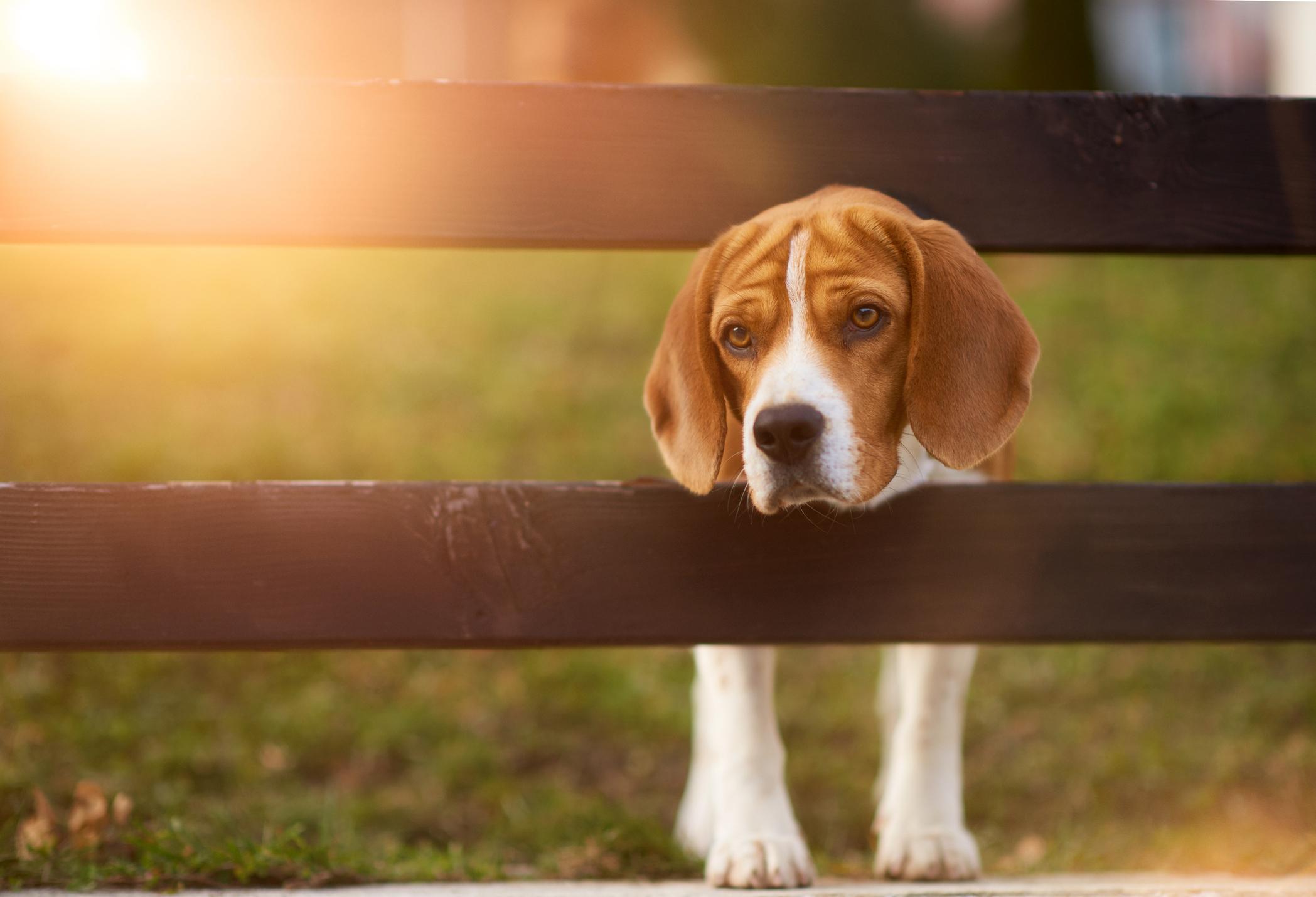 Zwierzęta odczuwają emocje, tak samo jak ludzie (fot. stock_colors / iStockphoto.com)
