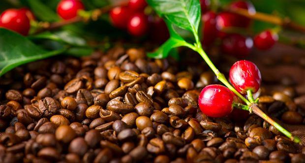 Kawy jednorodne