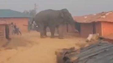 Słoń wpadł do obozu uciekinierów. Stratował domy, zabił dwoje dzieci