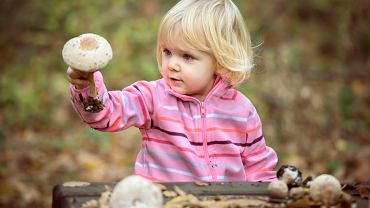 Od kiedy dzieci mogą jeść grzyby? Pieczarki to wyjątek od reguły