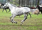 Stadnina koni w Janowie odwołuje halowe zawody. Przez... pogodę