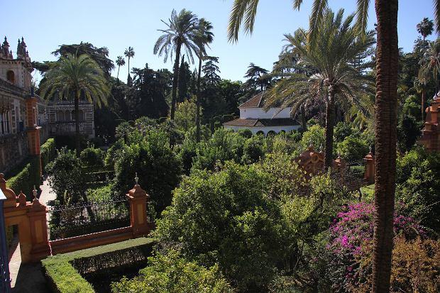 Ogrody alkazaru w Sewilli