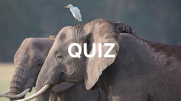To naprawdę trudny quiz! Już 10 punktów to powód do dumy