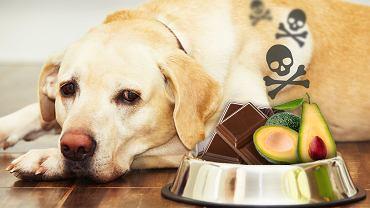 Tych rzeczy NIGDY nie należy dawać psom. Jedne powodują biegunkę, inne śmierć