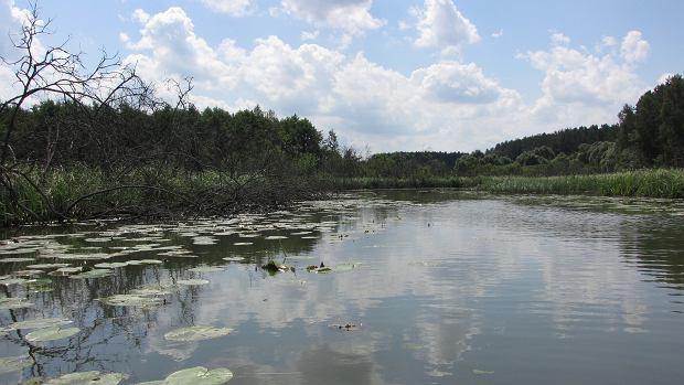 Rzeka Łyna