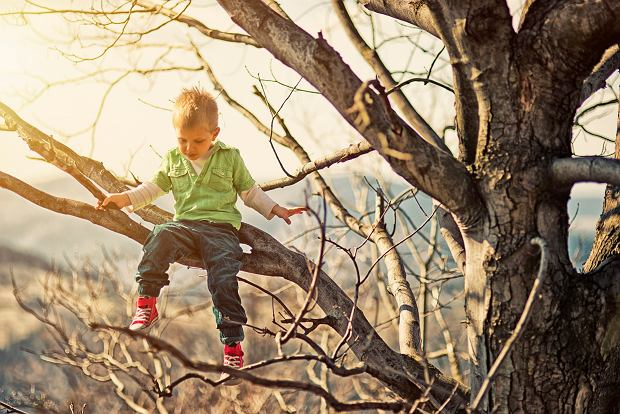 Little boy climbing tree.