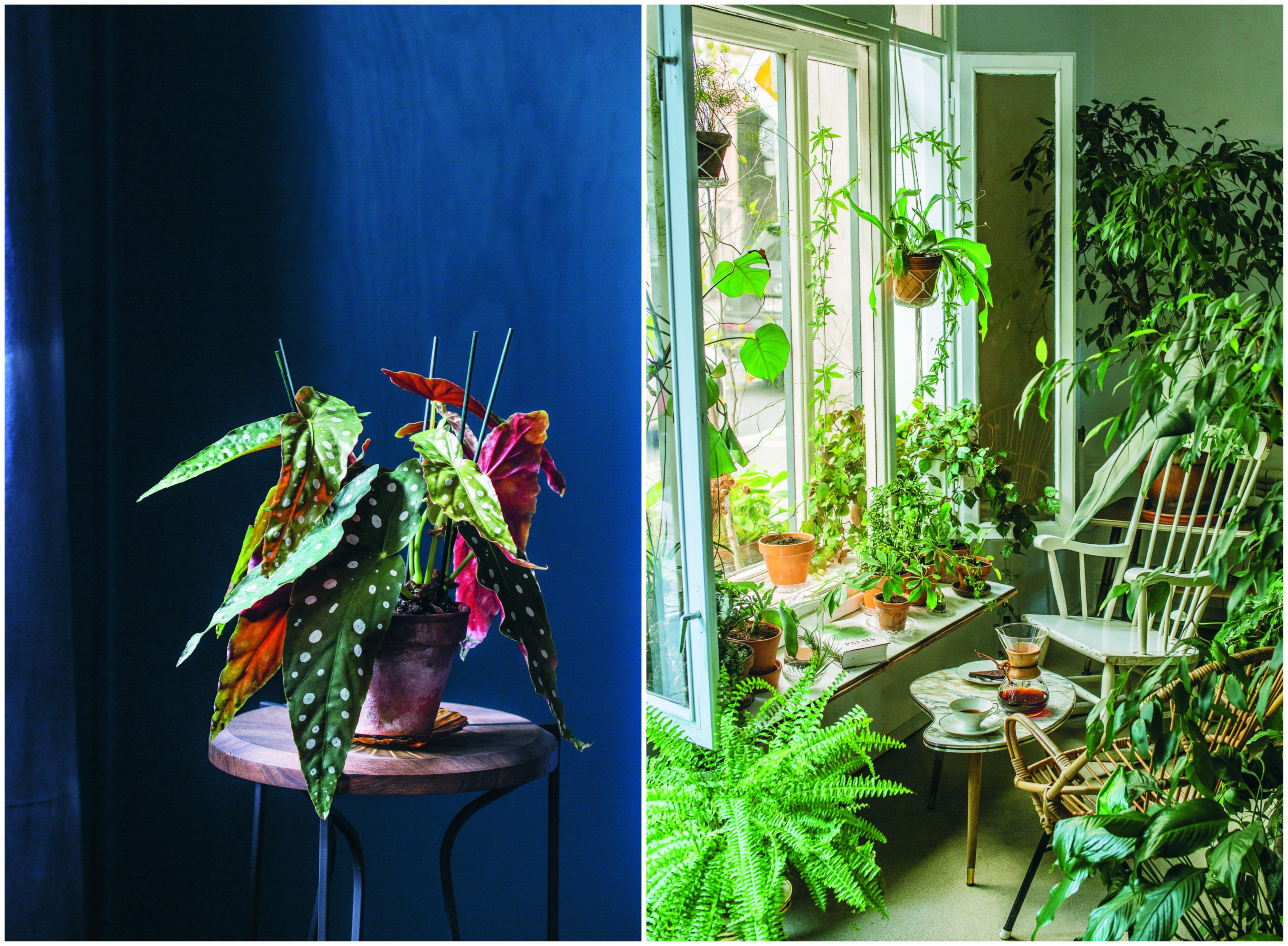Zdjęcia z książki 'O roślinach. Domowa uprawa' (fot. materiały prasowe)