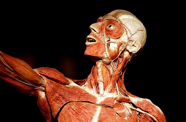 Najpierw trzeba usunąć zawartą w tkankach wodę i zastąpić ją acetonem. Później rękę, nogę lub inny kawałek ciała przekłada się do żywicy...