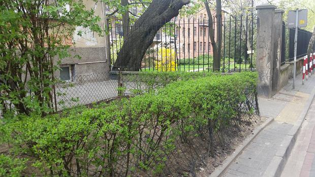 Teren zielony przy Al. 3 Maja