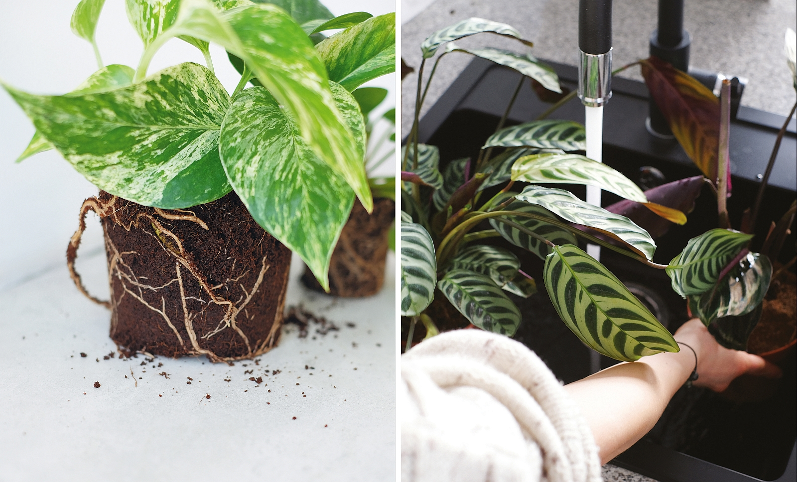 Lepiej przesuszyć niż przelać (fot. mat. prasowe z książki 'Projekt Rośliny / Weronika Muszkieta)