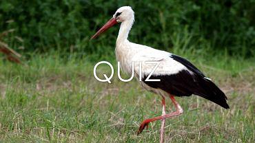 Zaskoczyliście nas. To tylko quiz o zwierzętach, a 50 proc. z was myli się już przy pierwszym pytaniu