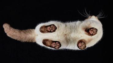 """Kochasz koty? To zobacz, jak wyglądają """"od dołu"""". Zabawny efekt pracy fotografa"""