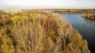 Wielka wycinka na Żeraniu. Z powodu inwestycji zniknie pięć tysięcy drzew