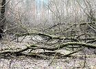 """Drwale tną na potęgę w Lesie Bródnowskim. """"To tylko przebudowa drzewostanu"""""""