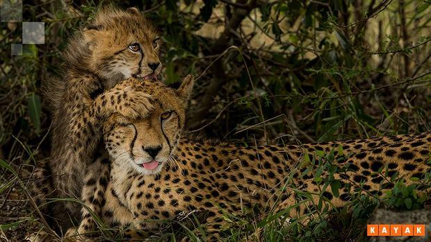 Zdjęcie wykonane w Afryce przez Mattiasa Kluma na potrzeby kampanii KAYAK