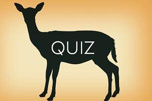 Rozpoznasz zwierzę po obrysie. Tak, to quiz ekstremalny. Podejmiesz wyzwanie? Średnia to tylko: 8/12