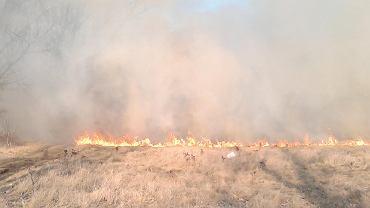 Pożar traw koło Tarnobrzega. Jest tak duży, że nie da się przejechać DK9