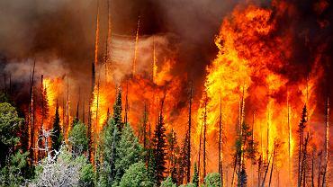 Pożary w Hiszpanii: tysiące osób ewakuowanych. Wśród nich kilkudziesięciu turystów z Polski